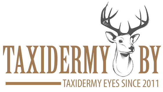 Taxidermy.by - taxidermy eyes since 2011