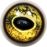 Taxidermy Frog Eyes 1b