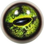 Taxidermy Frog Eyes 10b