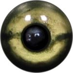 Taxidermy Reptile Eyes 10