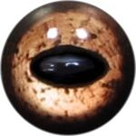 Taxidermy Reptile Eyes 11