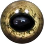 Taxidermy Reptile Eyes 12