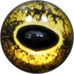 Taxidermy Frog Eyes 1