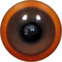 Taxidermy Mealy Amazon Eyes