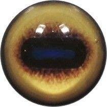 Taxidermy White Blesbok Eyes