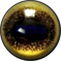 Taxidermy Black Wildebeest Eyes 2