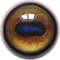 Taxidermy Blue Wildebeest Eyes
