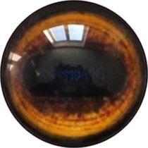 Taxidermy Manchurian Wapiti Eyes