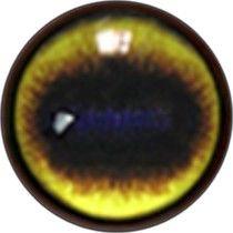 Taxidermy Spanish Ibex Eyes