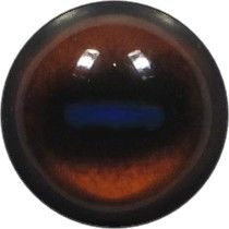 Taxidermy Universal Eyes T1