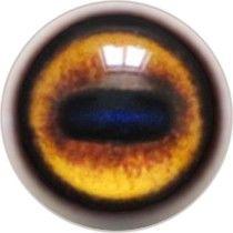 Taxidermy Bongo Eyes