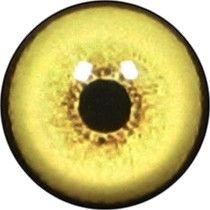 Taxidermy Wolf Eyes 2