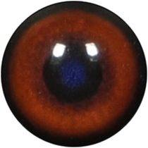 Taxidermy Boar Eyes 1
