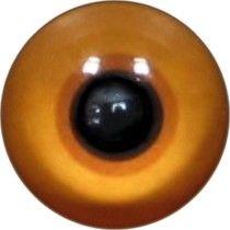 Taxidermy Meyer's Lorikeet Eyes