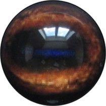 Taxidermy Wapiti Eyes 2