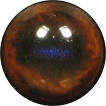 Taxidermy Wapiti Eyes 3