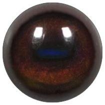 Taxidermy Gerenuk Eyes
