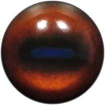Taxidermy Chamois Eyes