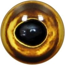 Taxidermy Golden universal Fish Eyes 1