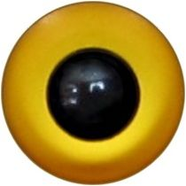 Taxidermy Universal Eyes U10.1
