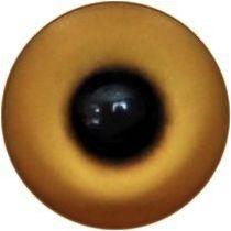 Taxidermy Universal Eyes U15.2