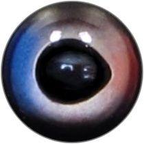 Taxidermy Marlin Eyes 2