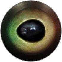 Taxidermy Pike Eyes 1