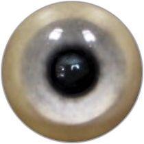 Taxidermy Scarlet Macaw Eyes 1