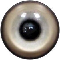 Taxidermy Scarlet Macaw Eyes 2