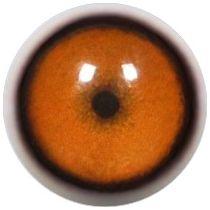 Taxidermy Cheetah Eyes 1