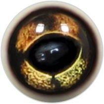 Taxidermy Grass Frog Eyes 1b