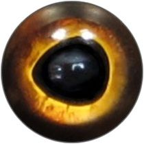 Taxidermy Muskie Eyes 7