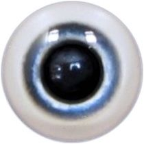 Taxidermy Plum-headed Parakeet Eyes 1