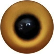 Taxidermy Universal Eyes U15.1