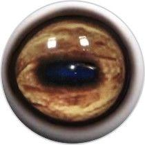 Taxidermy Eyes Argali 3