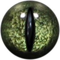 Taxidermy Reptile Eyes 3