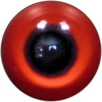 Taxidermy Crowned Pigeon Eyes 1