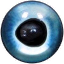Taxidermy Marlin Eyes 3