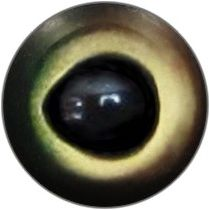 Taxidermy Taimen Eyes 1