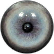 Taxidermy Jaguar Eyes 1